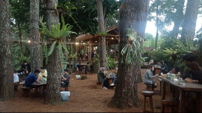 Berlama-lama menikmati Kopi di Kesejukan Pohon Pinus dan Bangunan Lama