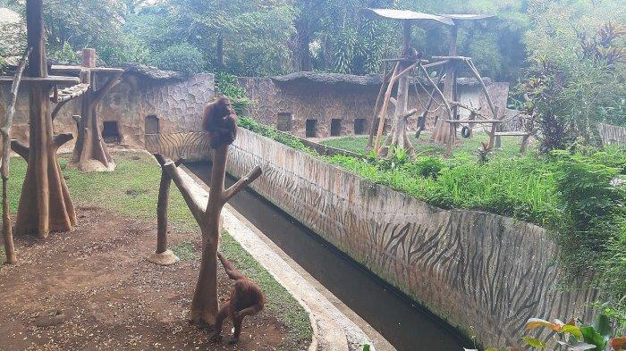 Kebun Binatang Bandung Masih Tutup, Dokter Hewan Pastikan Semua Satwa Sehat