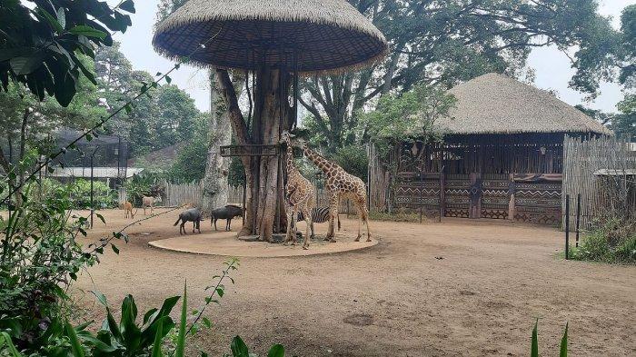 Pengelola Belum Akan Membuka Kembali Kebun Binatang Bandung untuk Wisatawan