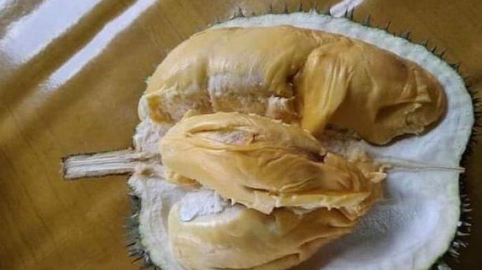 Durian lokal Cikakak, Kabupaten Sukabumi