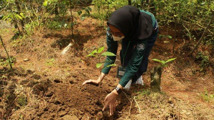 Peserta Jelajah Kopi 2021 menanam tanaman kopi di Arboretum Park Alam Endah, Rancabali, Kabupaten Bandung