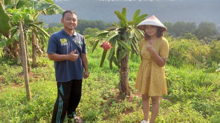 Perkebunan buah naga di Desa Cirangkong, Kecamatan Cijambe, Kabupaten Subang