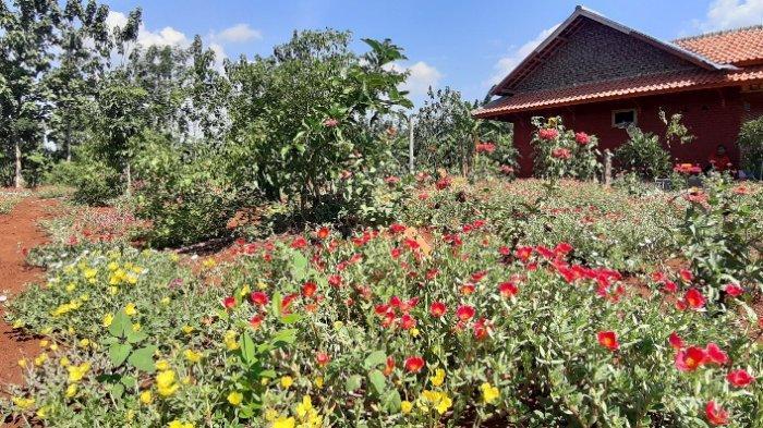 Taman bunga di tepi proyek Bendungan Sadawarna, Desa Tanjung, Kecamatan Surian, Kabupaten Sumedang