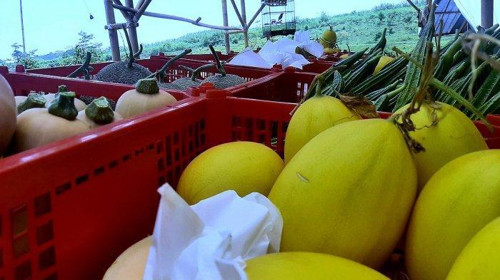 Aneka buah segar hasil Bumi Semesta Makmur Farm di Darangdan, Purwakarta
