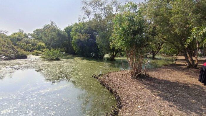 Kolam alam di Taman Kehati Indramayu, Jalan Pahlawan, Kelurahan Margadadi, Kecamatan/Kabupaten Indramayu