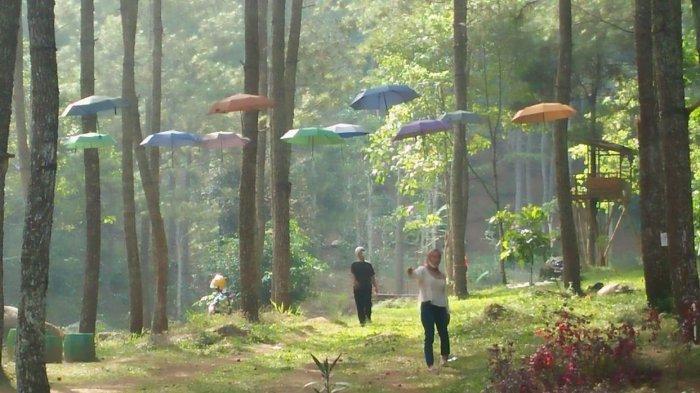 Payung-payung cantik di Wisata Alam Cipacet, Desa Genteng, Kecamatan Sukasari, Kabupaten Sumedang