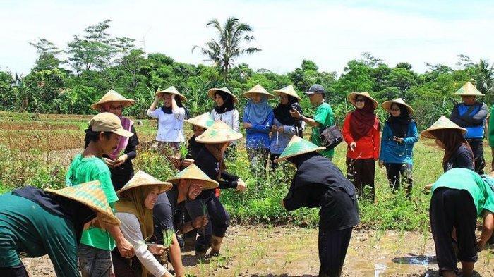 Wisata Bertani di Kampung Mulyaharja, Nikmati Bentangan Sawah nan Asri dengan Pemandangan Indah