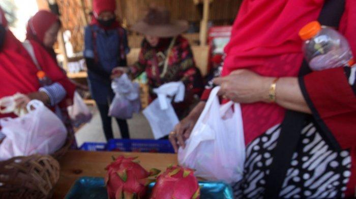 Membeli buah naga di Kebun Buah Naga Poernama, Kampung Jamban Sari, Desa Bayongbong, Kecamatan Bayongbong, Kabupaten Garut