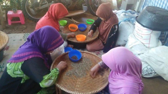Kegiatan Kelompok Wanita Tani (KWT) Mekar Arum di Kampung Cijolang, Desa Margaluyu, Tanjungsari, Sumedang