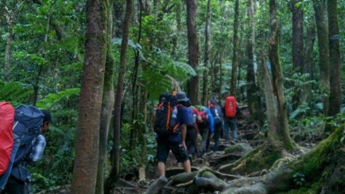 Pendaki Antre Naik Gunung Gede Pangrango, Jadi Tempat Favorit Pencinta Alam Saat Libur Lebaran