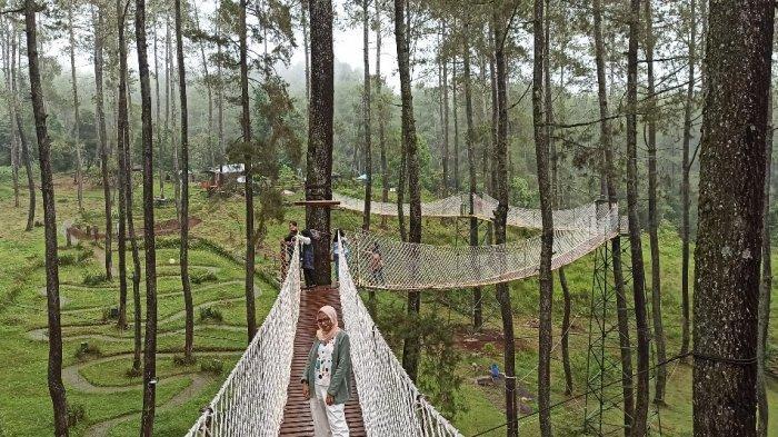 Segarnya Hutan Pinus, Indahnya Beragam Jenis Anggrek, dan Spot Foto Indah di Orchid Forest Cikole