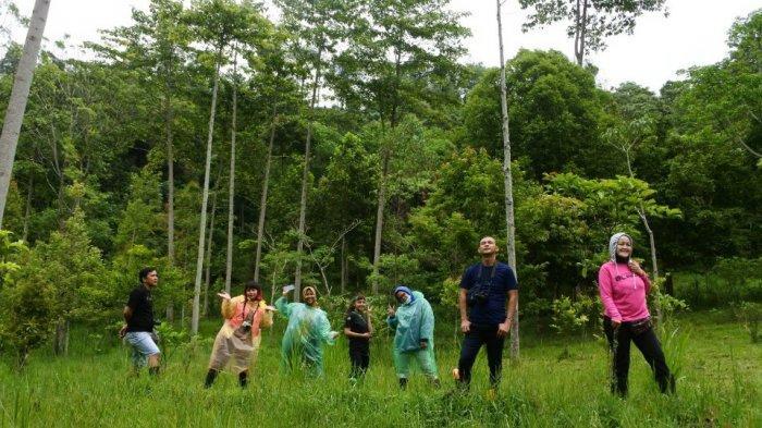 Trekking Seru Ke Hutan Pinus Kawasan Maribaya, Wisatawan Bisa Pilih Tingkat Kesulitan Jalur