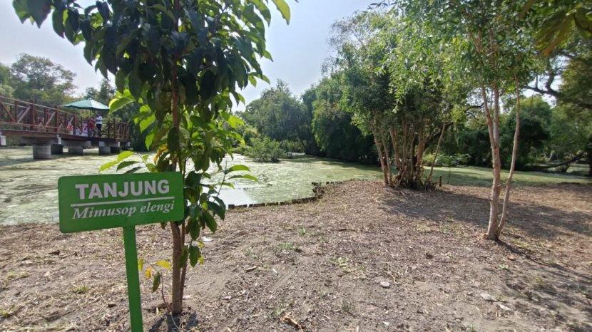 Rawa Gelam Satu-satunya di Pulau Jawa Ada di Taman Kehati Indramayu, Ada 18 jenis Burung