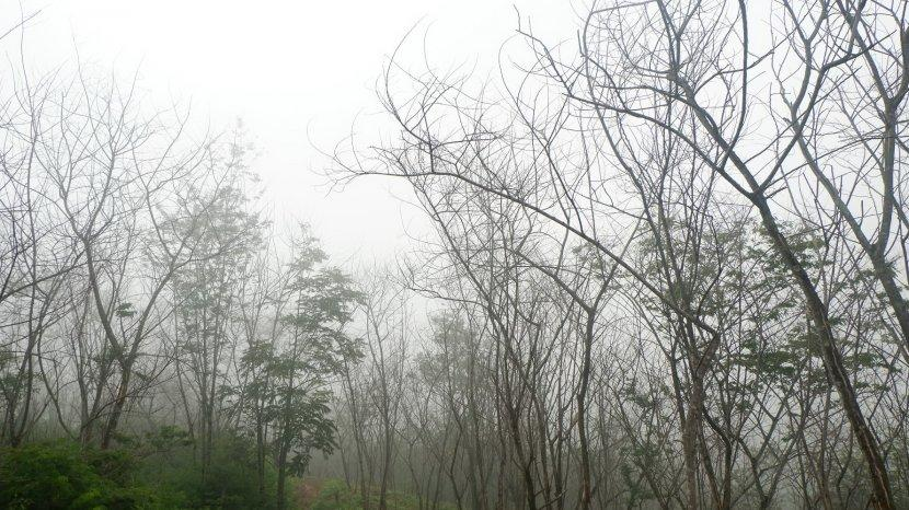 Pesona Hutan Mati di Timur Gunung Puntang Pegunungan Malabar, Jadi Lintasan Hiking dan Motorcross