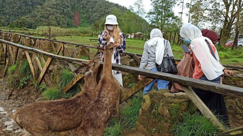 Penangkaran Rusa di Rancaupas Kabupaten Bandung, Lokasi Favorit untuk Wisata dan Foto Prewedding