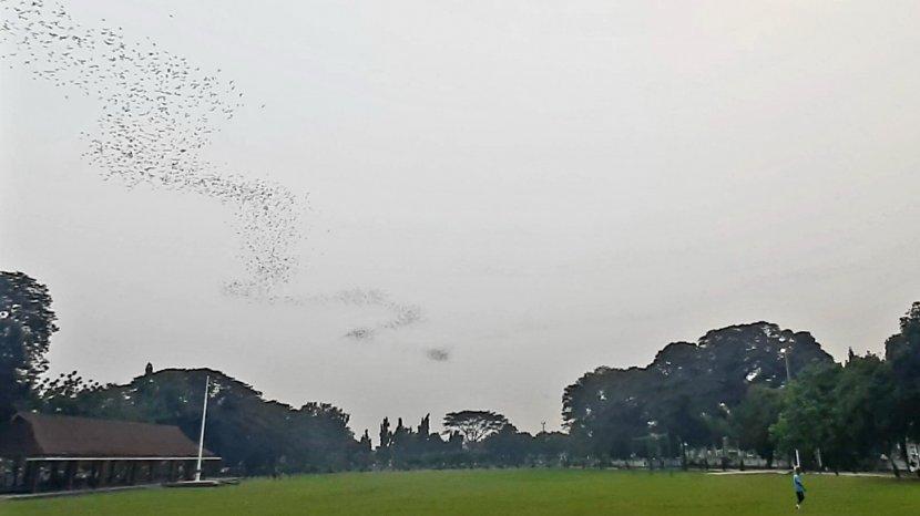 Menanti Waktu Berbuka Puasa Sambil Melihat Formasi Indah Kelelawar di Atas Alun-alun Subang