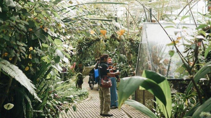 Kawasan Wisata Orchid Forest Cikole Kembali Dibuka untuk Wisatawan, Sediakan Dua Wahana Baru