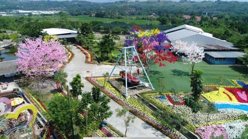 Wisatawan Ramai-ramai berfoto di Taman Bunga Cikao Park, Tiket Masuk Saat Weekend Rp 20.000