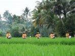 Desa-Cisande-Sukabumi.jpg