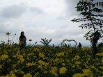 taman-bunga-celosia-3.jpg