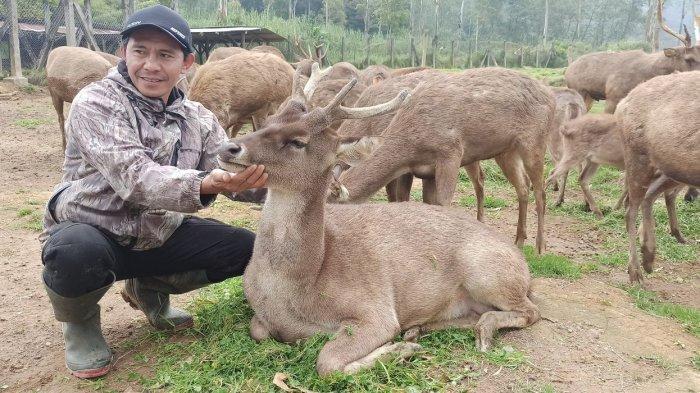 Pawang rusa di Kampung Cai, Rancaupas Aep Salahudin