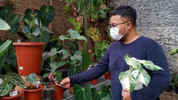 Andhika saat menunjukkan koleksi anthoriumnya  di Desa Cinunuk, Kecamatan Cileunyi, Kabupaten Bandung
