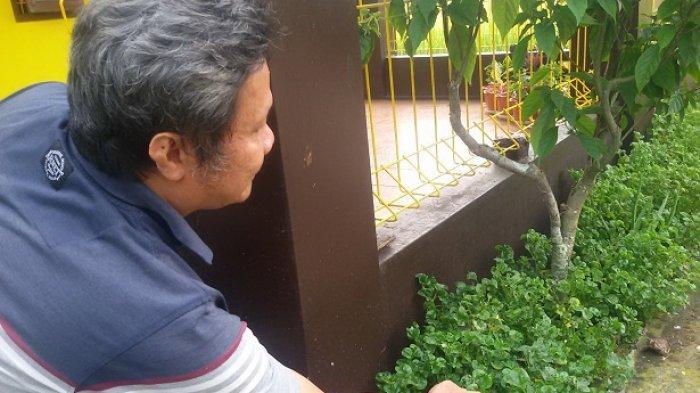 Tanaman bayam brazil yang tumbuh subur di pekarangan rumah Lili Supriatna, di sisi irigasi Cikumetir Jalan Cilulut Kertasari Ciamis.