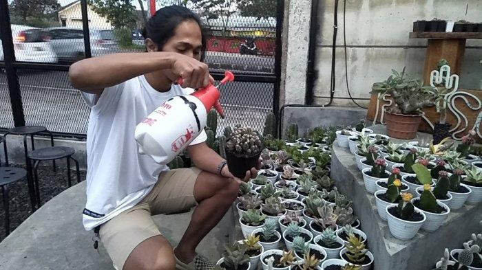 Deni Santosa saat menyiram beberapa kaktus untuk di jual di Jalan Lingkar Selatan, Kota Sukabumi