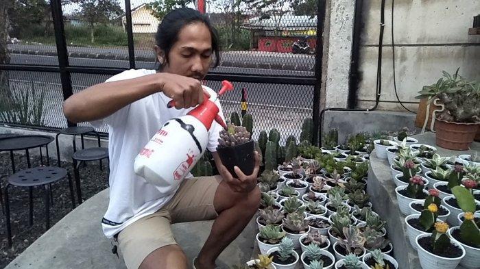 Bosan Jadi Pegawai, Deni Santosa Fokus ke Bisnis Kaktus, Pendapatan Sehari Rp 1 Juta