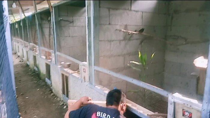 Jhon KKY peternak burung di Pangandaran