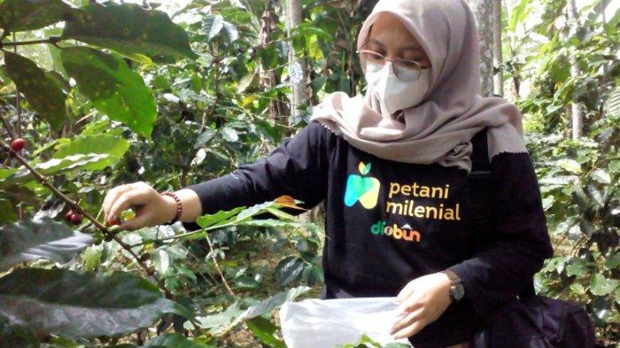 Jemari Shandra Lincah  Memetik Kopi Boehoen Nagarawangi, Pemudi Itu Jalani Program Petani Milenial