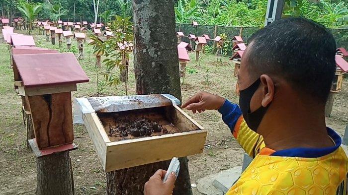 Budi daya lebah madu teuweul di Dusun Babakanjaya, Desa Kedungwuluh, Kecamatan Padaherang, Kabupaten Pangandaran