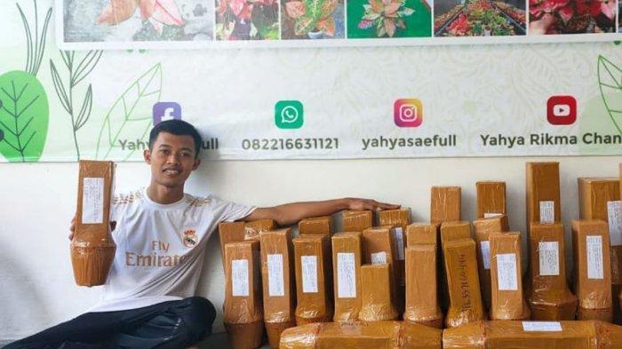 Yaya Saeful Uyun, penjual bunga aglonema di Pangandaran