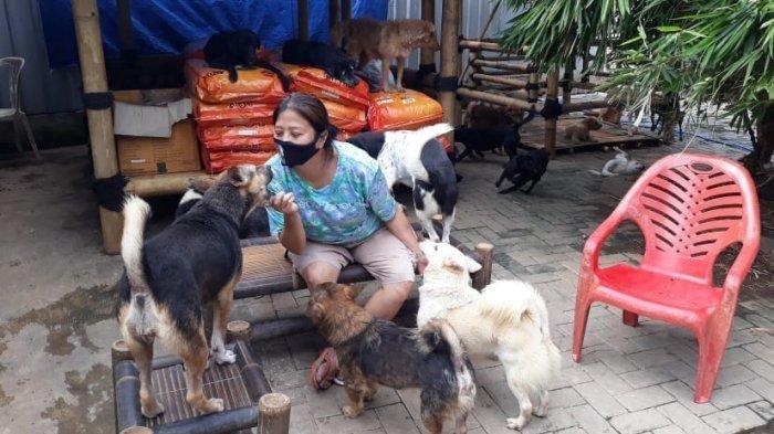 Pejaten Shelter, Rumah Anjing-anjing Telantar
