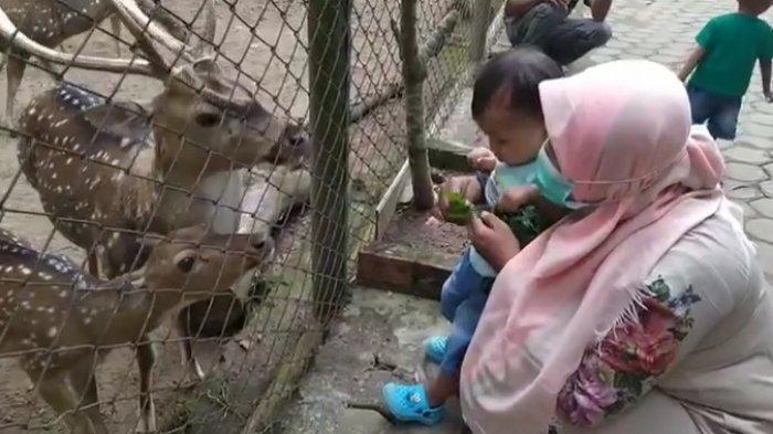 Dua Wisata Kebun Binatang Kota Jambi Selalu Ramai Saat Liburan