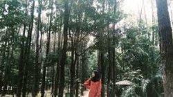 Liburan Akhir Pekan, Taman Hutan Pinus Pal 10 Kota Jambi, Tempat Wisata Kekinian Wajib Dikunjungi