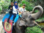 gajah-taman-rimba-alfa.jpg