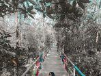 hutan-mangrove-pangkalan-bambu.jpg