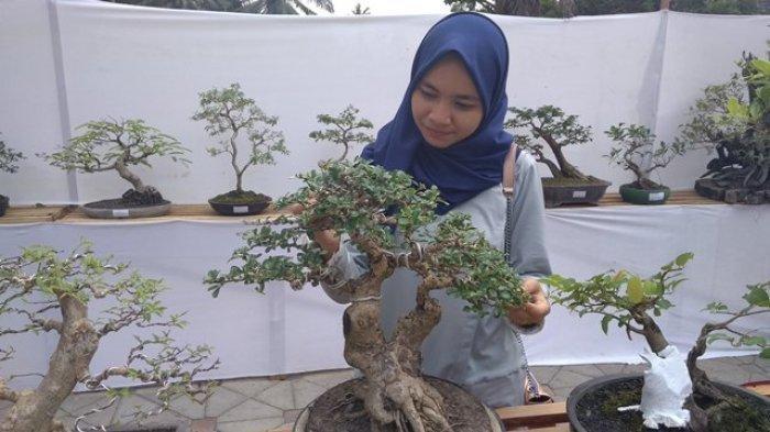 Bonsai-bonsai Yang Termasuk Langka di Jambi Ini Hanya Dimiliki Beberapa Orang Saja