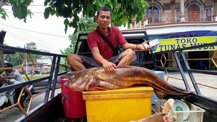 Ikan Tapa Seberat 38 Kg Yang Dijual Iron Ini Jadi Pusat Perhatian Warga