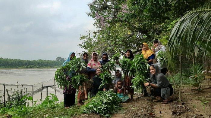 Berperan Membangun Desa, Kelompok Perempuan Desa Pulau Raman Kembangkan Demplot
