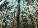 taman-hutan-pinus-di-kota-jambi.jpg