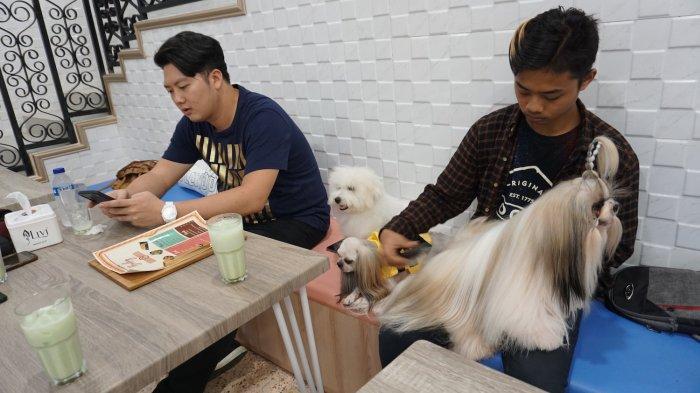 Wow, Semarang Ada Tempat Nongkrong Tuan dan Anjing, Ada Petshop, Hotel dan Salon Anjing, dan Kafe