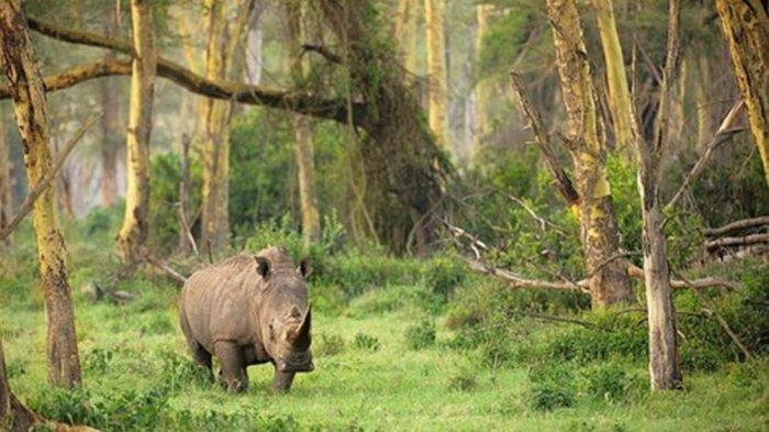 Taman Nasional Ujung Kulon Kembali Dibuka Untuk Umum Mulai 10 Agustus 2020 Dengan Protokol Kesehatan