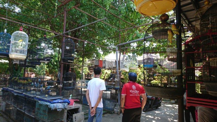 Tak Hanya Tempat Jual Beli Burung, Datang ke Pasar Karimata Serasa Berwisata di Kebun Binatang