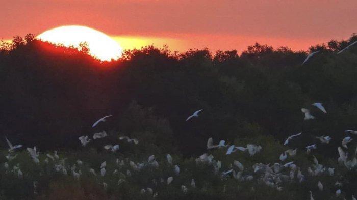 Keindahan Kampung Blekok Situbondo, Negeri Burung yang Masuk 100 Desa Wisata Terbaik ADWI 2021