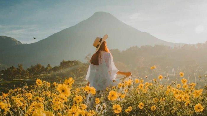 Pemandangan hamparan kebun bunga matahari di Selotapak Trawas Mojokerto