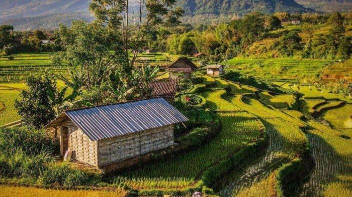 Pemandangan lereng gunung lengkap dengan persawahan dan aktivitas petani di Desa Selotapak