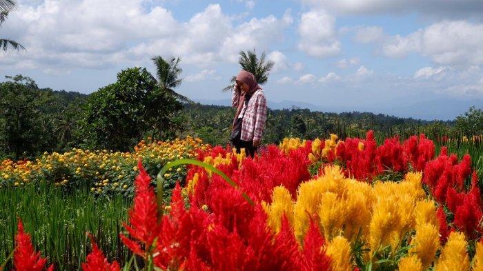 10 Tempat Wisata di Banyuwangi yang Wajib Dikunjungi Saat New Normal, Cek Verifikasi Sehat