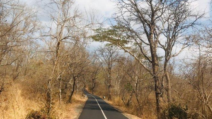 Sambut Tahun Baru, Taman Nasional Baluran Gencar Beri Imbauan Pengunjung